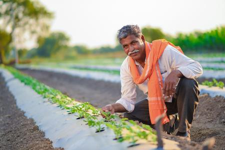 Indian farmer checking his watermelon field