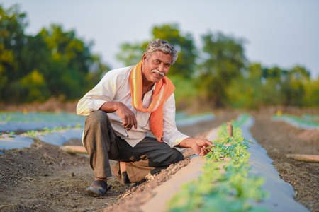Indian farmer checking his watermelon field