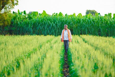 Indiase boer bedrijf gewas plant in zijn tarweveld