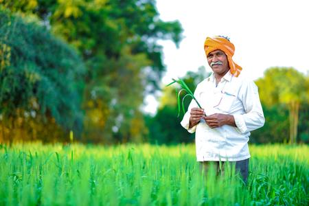 Agricultor indio sosteniendo la planta de cultivo en su campo de trigo