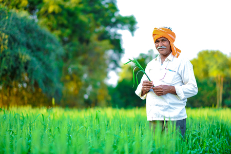 Indischer Landwirt, der Erntepflanze in seinem Weizenfeld hält