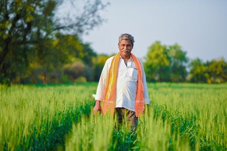 Coltivatore indiano che tiene pianta del raccolto nel suo campo di grano