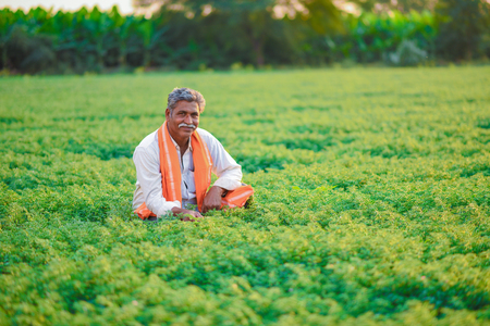 Indian farmer at the chickpea field Stock Photo