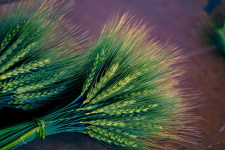 green Wheat spikes on dark wooden board Stock Photo - 124684462