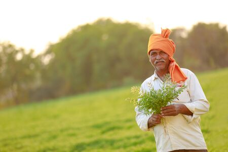 Indian farmer at the chickpea field, farmer showing chickpea plant Stock Photo - 124974918