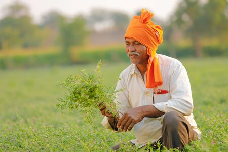 Indian farmer at the chickpea field, farmer showing chickpea plant Stock Photo - 124974936