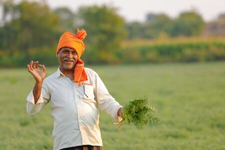 Indian farmer at the chickpea field, farmer showing chickpea plant Stock Photo