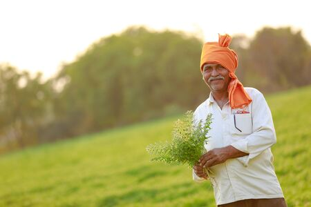 Indian farmer at the chickpea field, farmer showing chickpea plant Stock Photo - 124975040