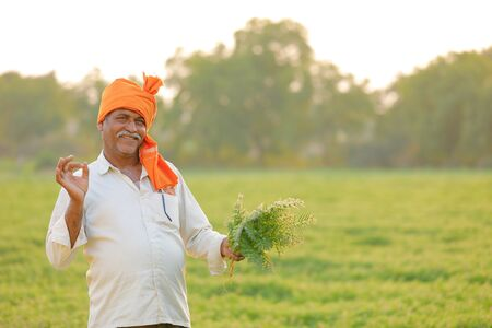 Indian farmer at the chickpea field, farmer showing chickpea plant 免版税图像