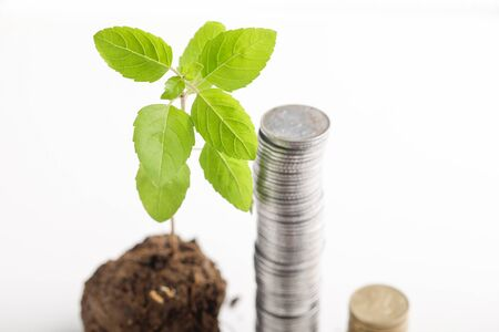 small tree and  Indian coin on white background Stockfoto