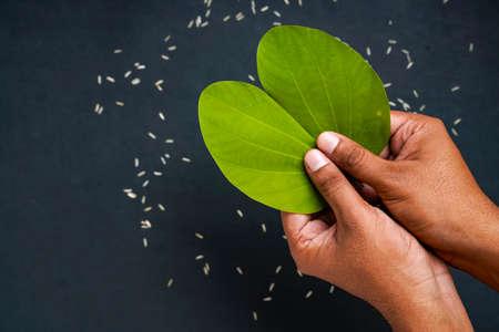 Indian festival Dussehra, green apta leaf in hand
