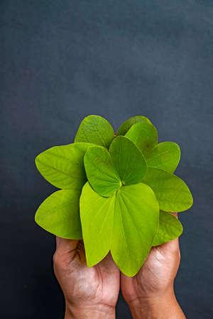 Indian festival dussehra , green leaf