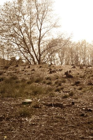 encroach: Grassy Hillside with Felled Trees Stock Photo
