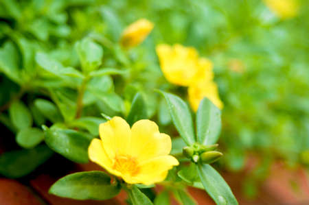 cuttings: Keen yellow flowers