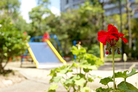 childrens': Red Geraniums and childrens Park