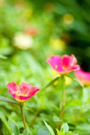 keen: Keen little red flowers