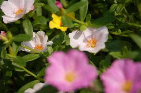 keen: Keen on pink flower