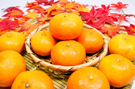mandarin orange: Early mandarin orange in Japan in the fall of taste Stock Photo