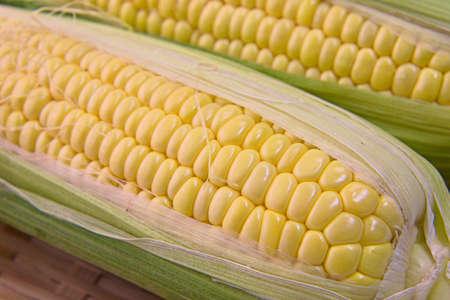 Closeup photo of Corn from Hokkaido Standard-Bild - 109977873