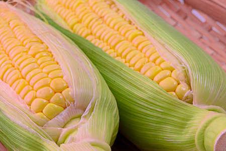 Closeup photo of Corn from Hokkaido Standard-Bild - 109977877