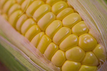 Closeup photo of Corn from Hokkaido Standard-Bild - 109977878