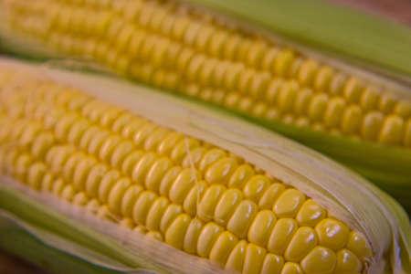 Closeup photo of Corn from Hokkaido Standard-Bild - 109977880
