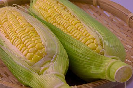 Closeup photo of Corn from Hokkaido Standard-Bild - 109977881