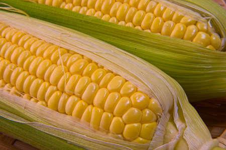 Closeup photo of Corn from Hokkaido Standard-Bild - 109977884