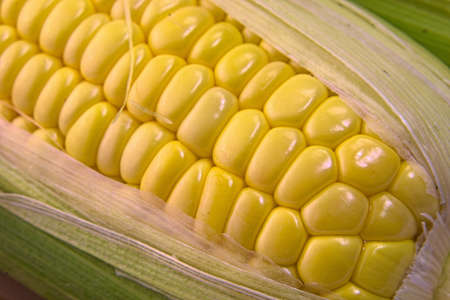 Closeup photo of Corn from Hokkaido Standard-Bild - 109977886