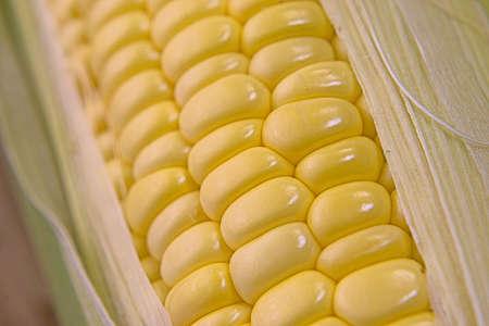 Closeup photo of Corn from Hokkaido Standard-Bild - 110116860