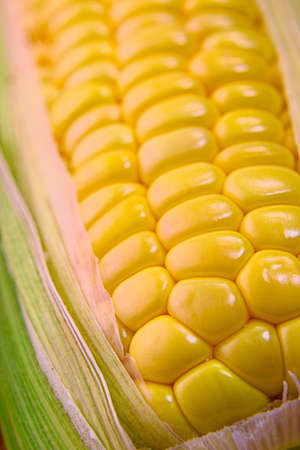 Closeup photo of Corn from Hokkaido Standard-Bild - 110116861