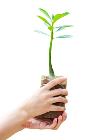 fertile: Hands holding green plant isolated on white background