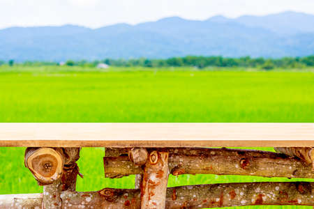 Green ear of rice in paddy rice field under blue sky and chair