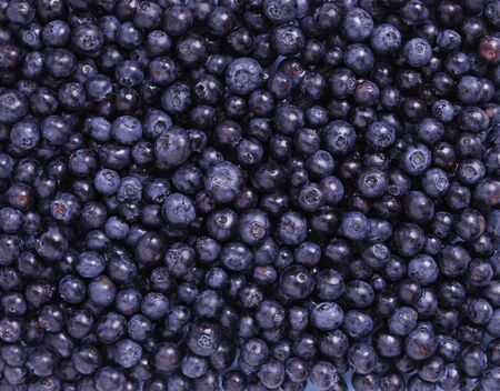 Freshly Blueberries Stock Photo