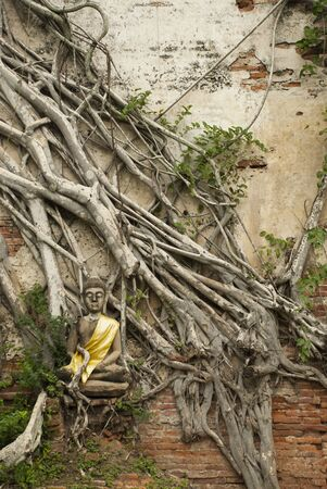 Stone buddha in the tree roots Stock Photo