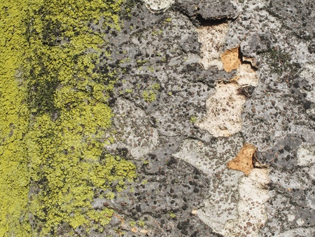 Bark textured for background