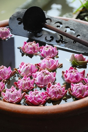 Pink water lily flowers on basin Stock Photo