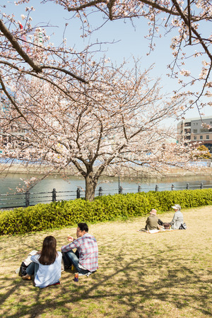 Yokohama, Japan - March 22, 2013  Japanese people is sitting by the bay seeing Sakura blossom in a park in Minatomirai, Yokohama, Japan