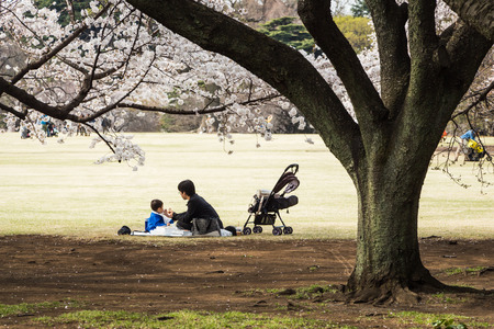 Tokyo, Japan - March 23, 2013  Unidentified child and parent are sitting in Shinjukugyoen park seeing Sakura blossom at Shinjuku, Tokyo, Japan