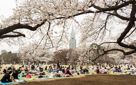 Tokyo, Japan - March 23, 2013  Japanese people is sitting in Shinjukugyoen park seeing Sakura blossom at Shinjuku, Tokyo, Japan
