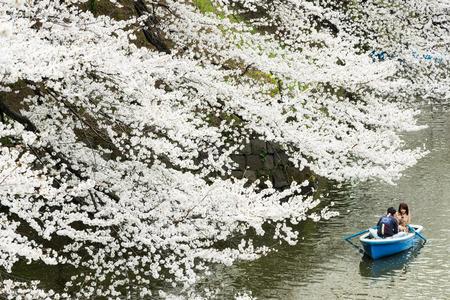 Tokyo, Japan - March 23, 2013  Japanese people paddling boat in river to see Sakura blossom at Kudanshita, Tokyo, Japan