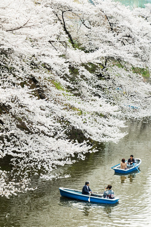 Tokyo, Japan - March 23, 2013  Japanese people paddling boats in river to see Sakura blossom at Kudanshita, Tokyo, Japan Editorial
