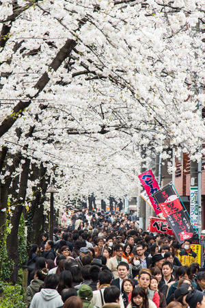 Tokyo, Japan - March 24, 2013  Japanese people is coming to see Sakura blossom at Nakameguro, Tokyo, Japan Editorial