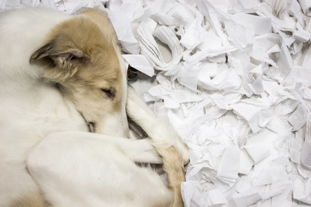 A sleeping dog in a paper pile Kho ảnh