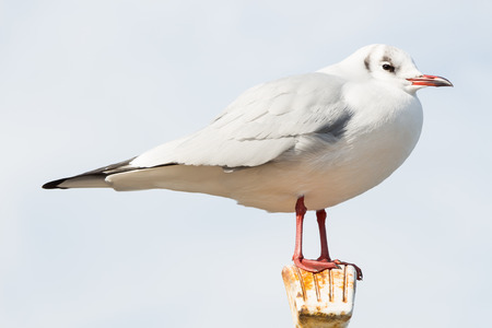 A close up of a seagull