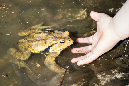 a frog in a pond and a hand