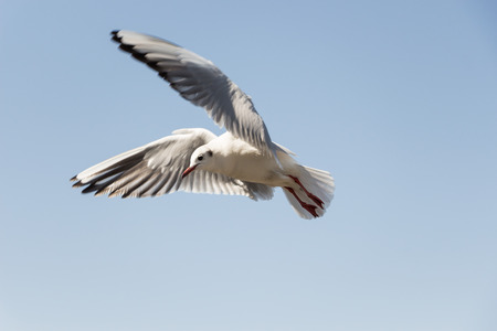 a close up of flying seagull