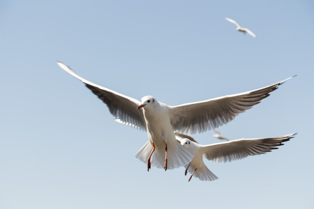 a close up of flying seagulls