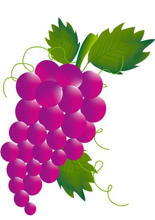 ferment: Bunch of red grapes