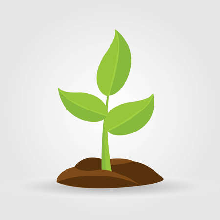 Growth of plant, from sprout to vegetable. Planting tree.